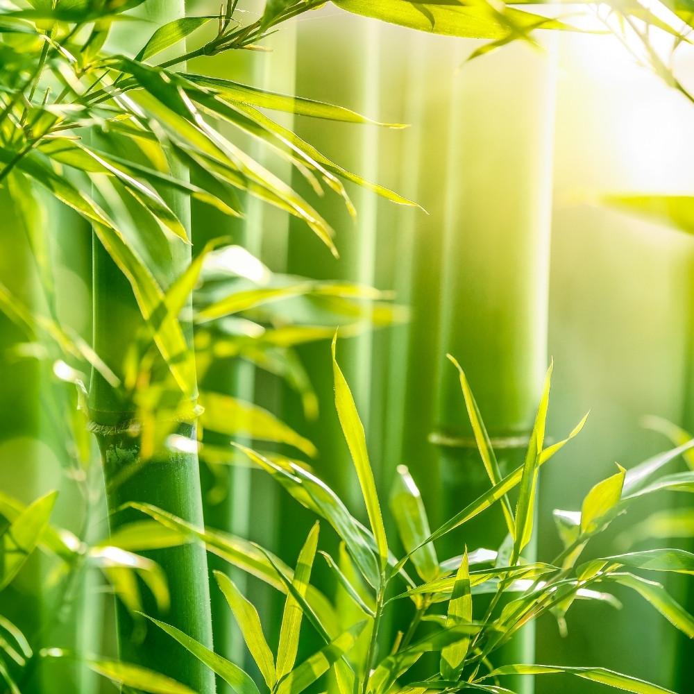 Bambus w higienie, sypialni i na talerzu